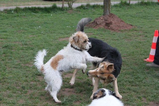 Hundeschule Schnauzentreff Erwachsene Hunde